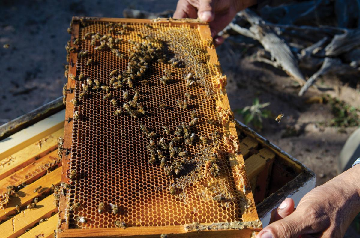 A honeycomb straight from the hive box.