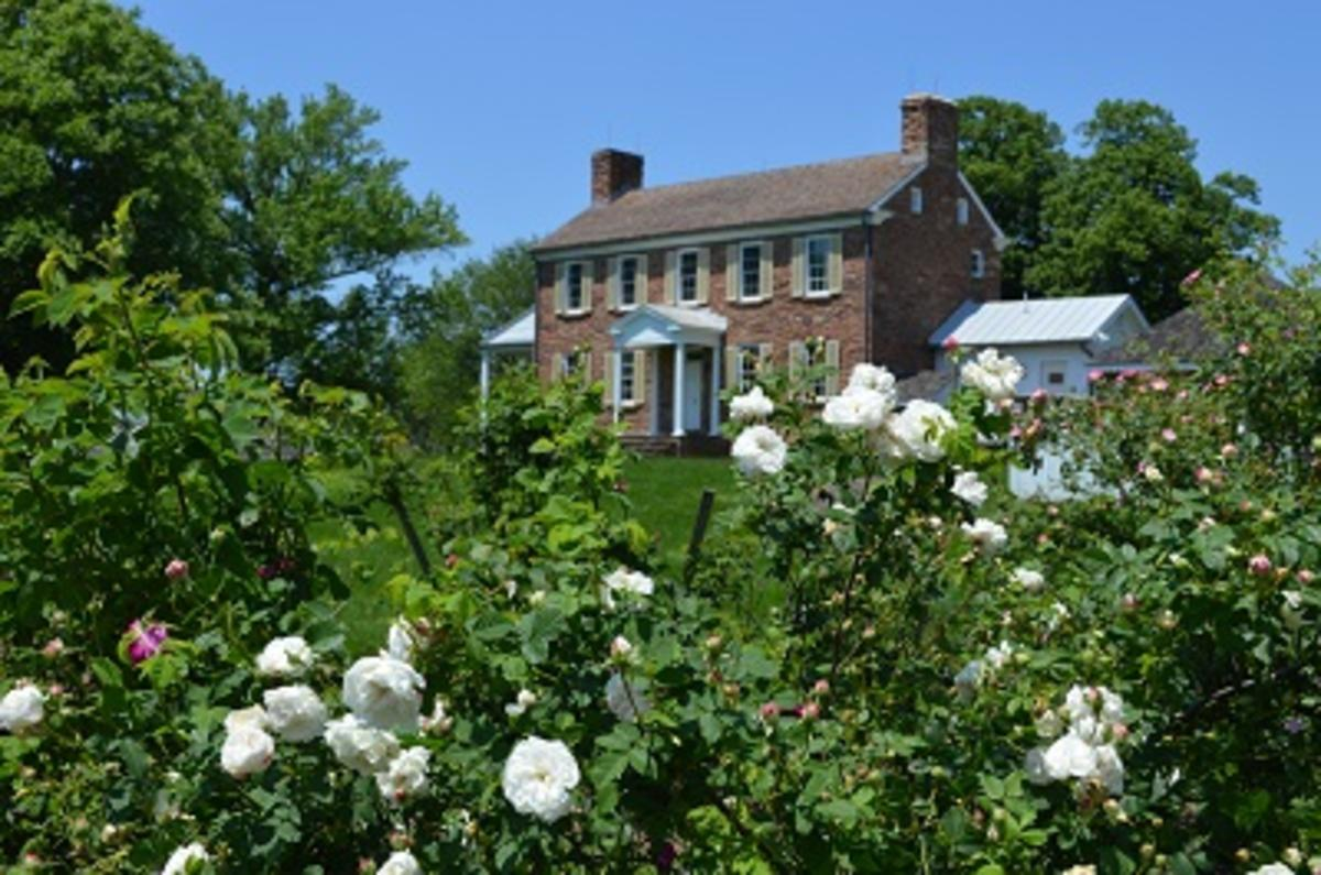 rose bushes with a historic building in the background
