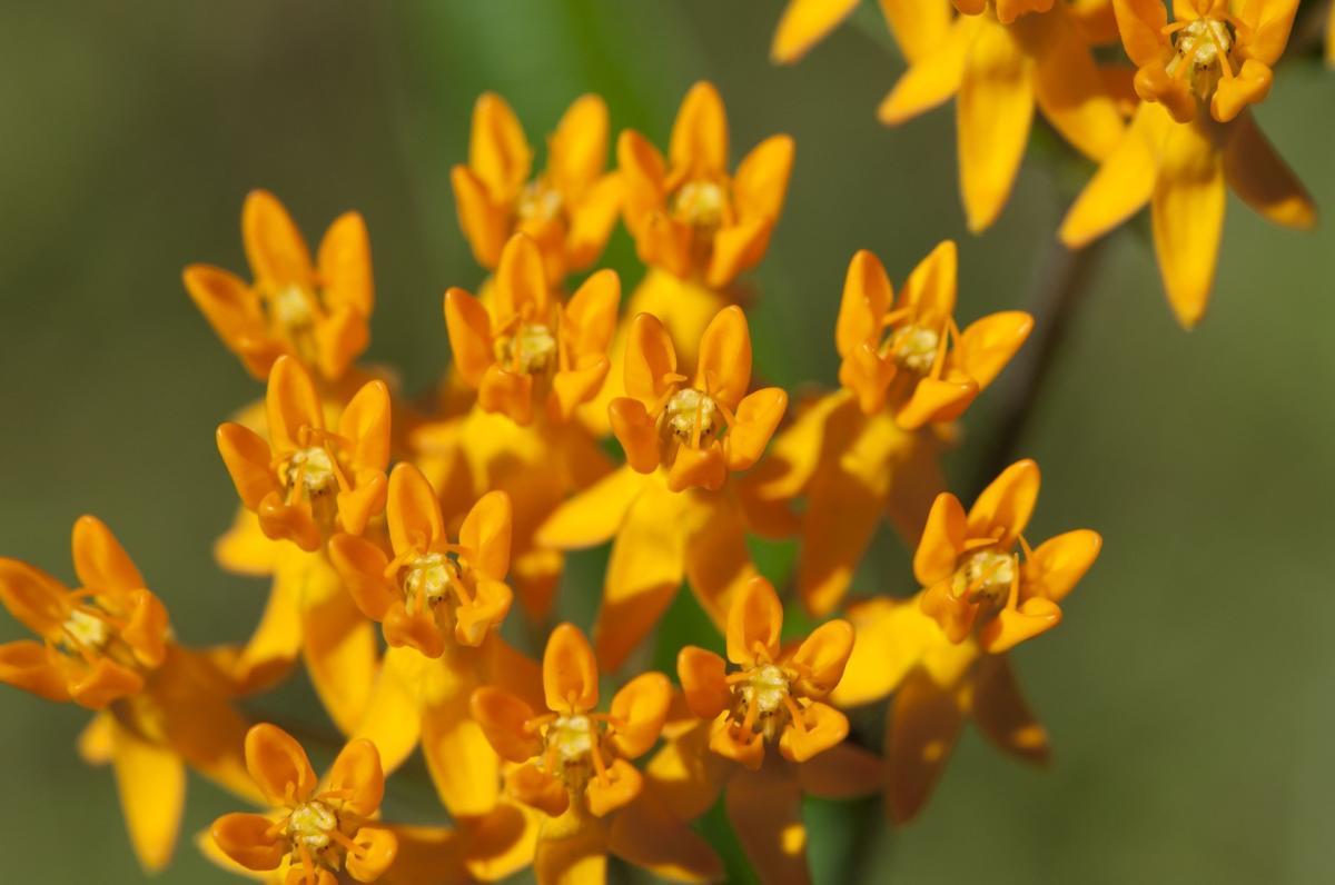 Guest blogger - Plants 4