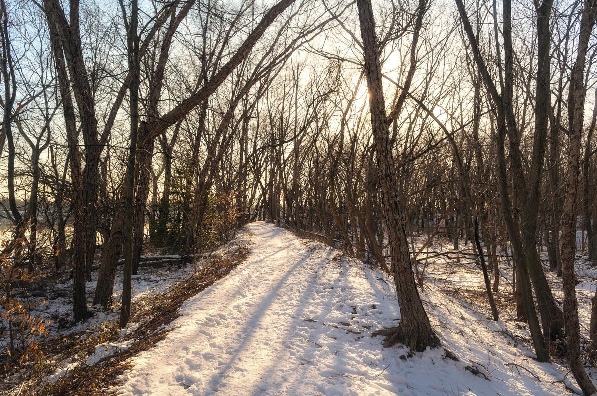 Snow in Neshaminy State Park