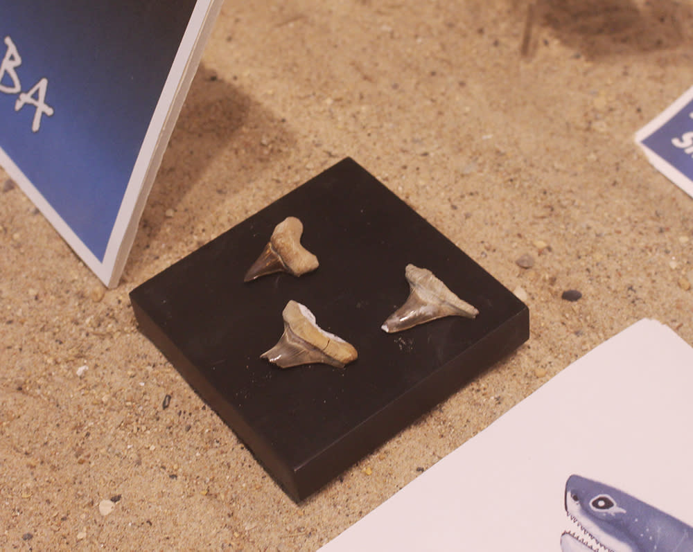 Shark teeth at Canadian Fossil Discovery Centre