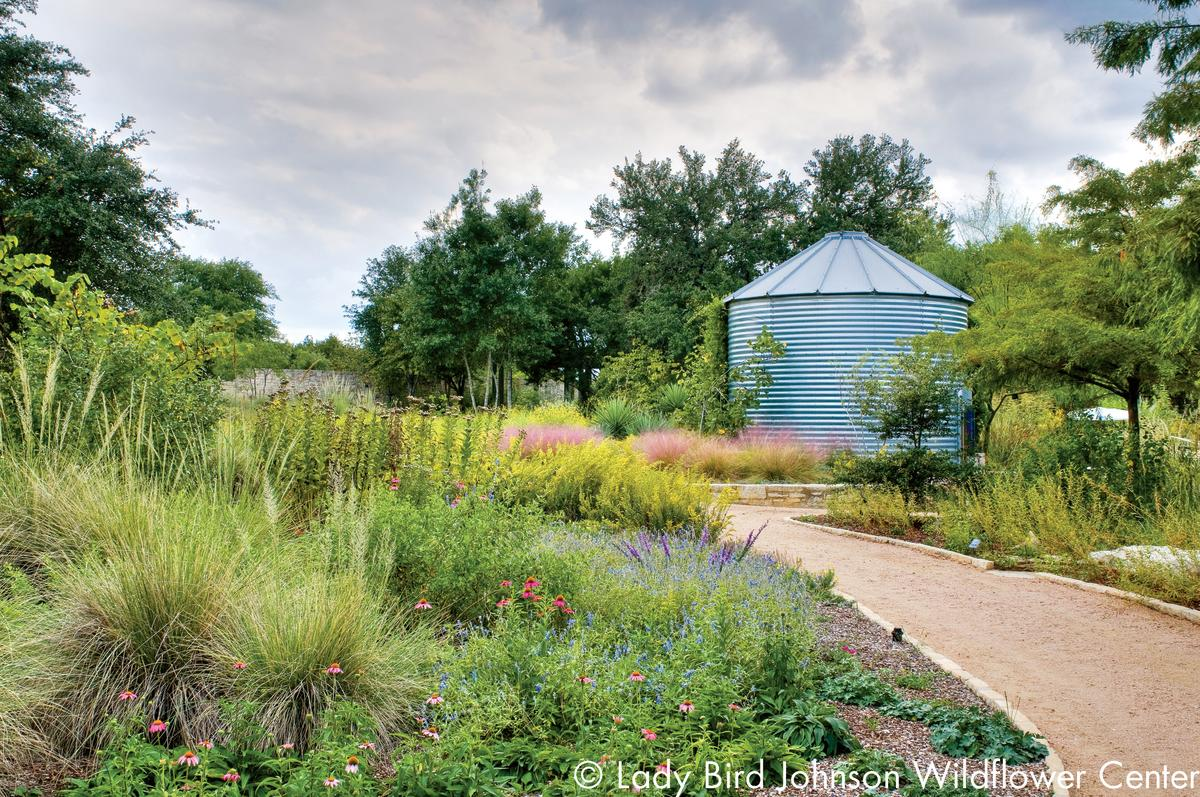 natural Texas garden at the Lady Bird Johnson Wildflower Center