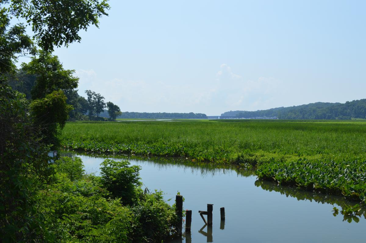 Neabsco Creek Wetlands