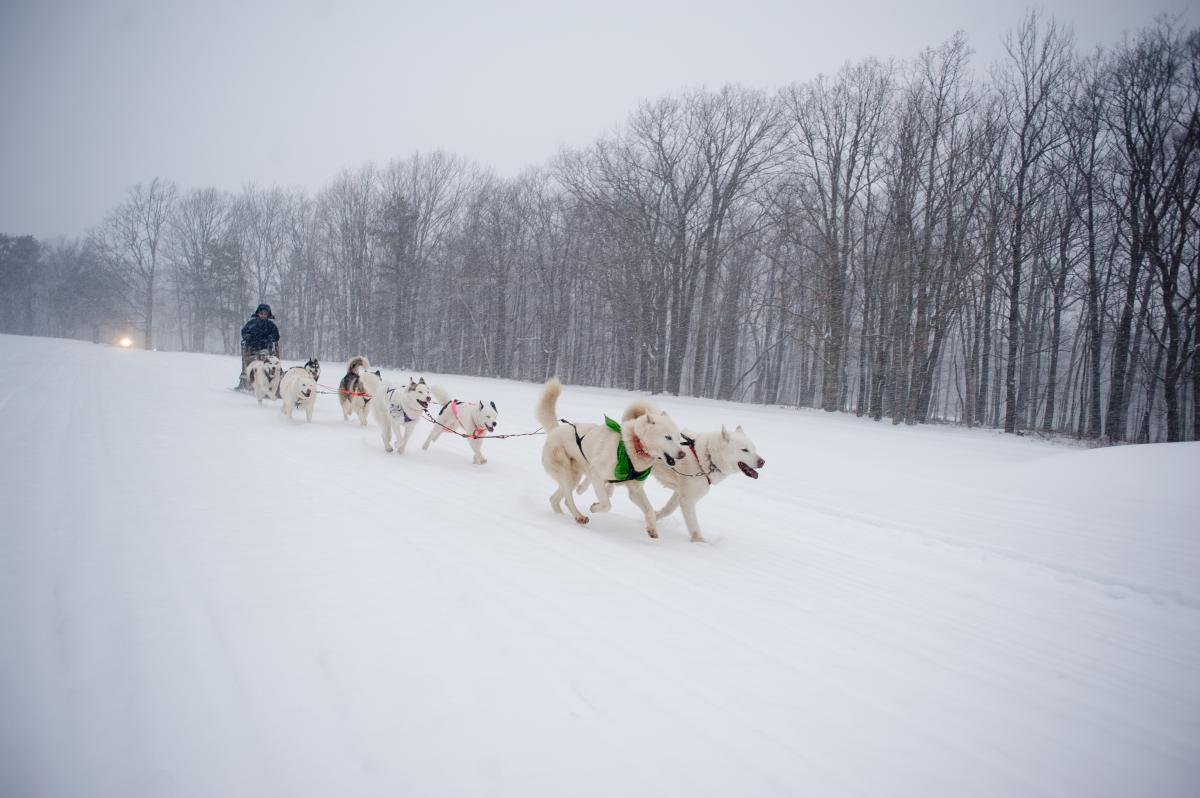 Arctic Paws Dog Sled Tours at Pocono Manor