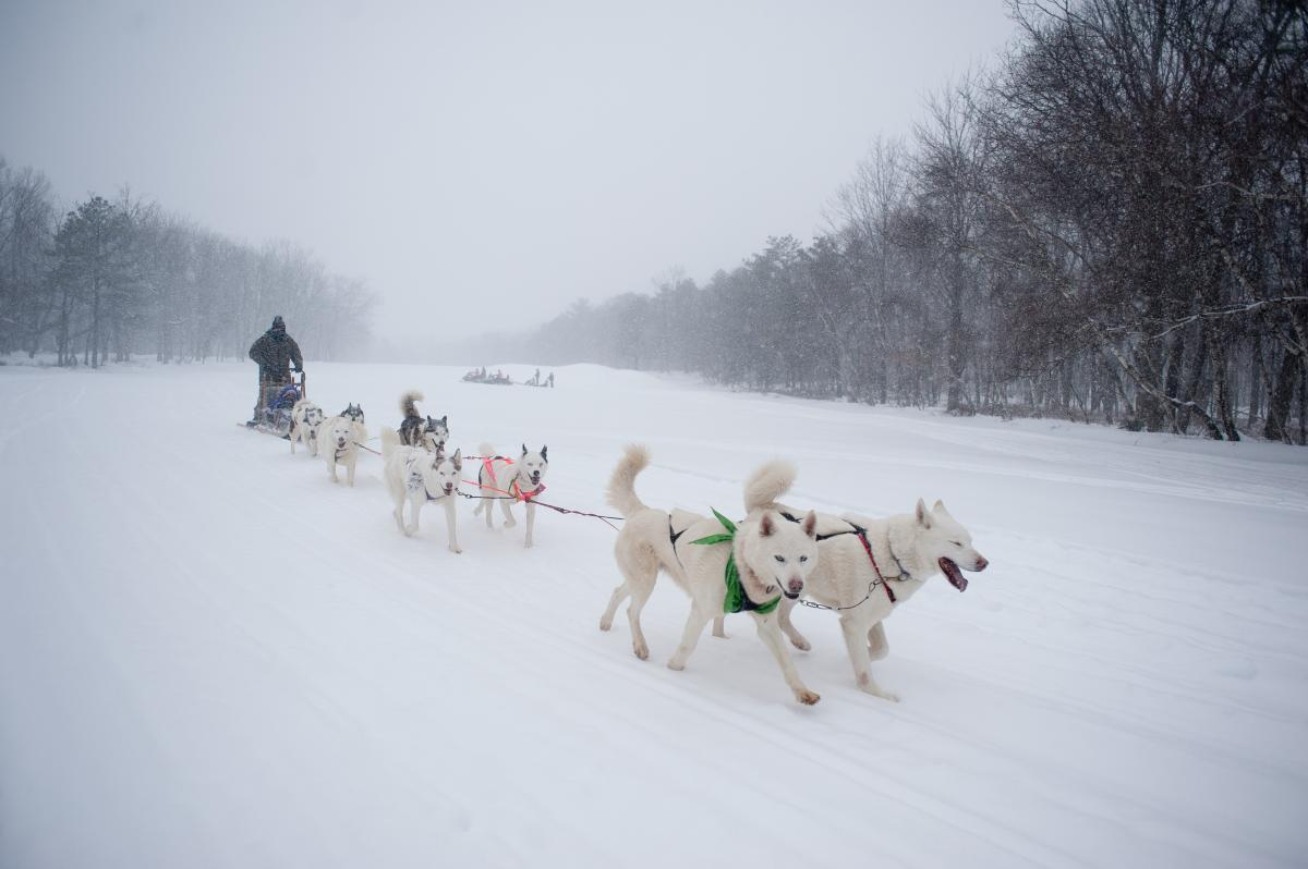 Dog Sledding in the Pocono Mountains