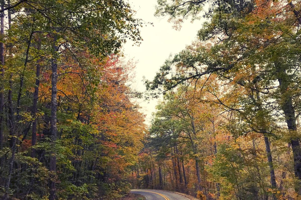 Trees colored in fall foliage line the Little River Canyon Road
