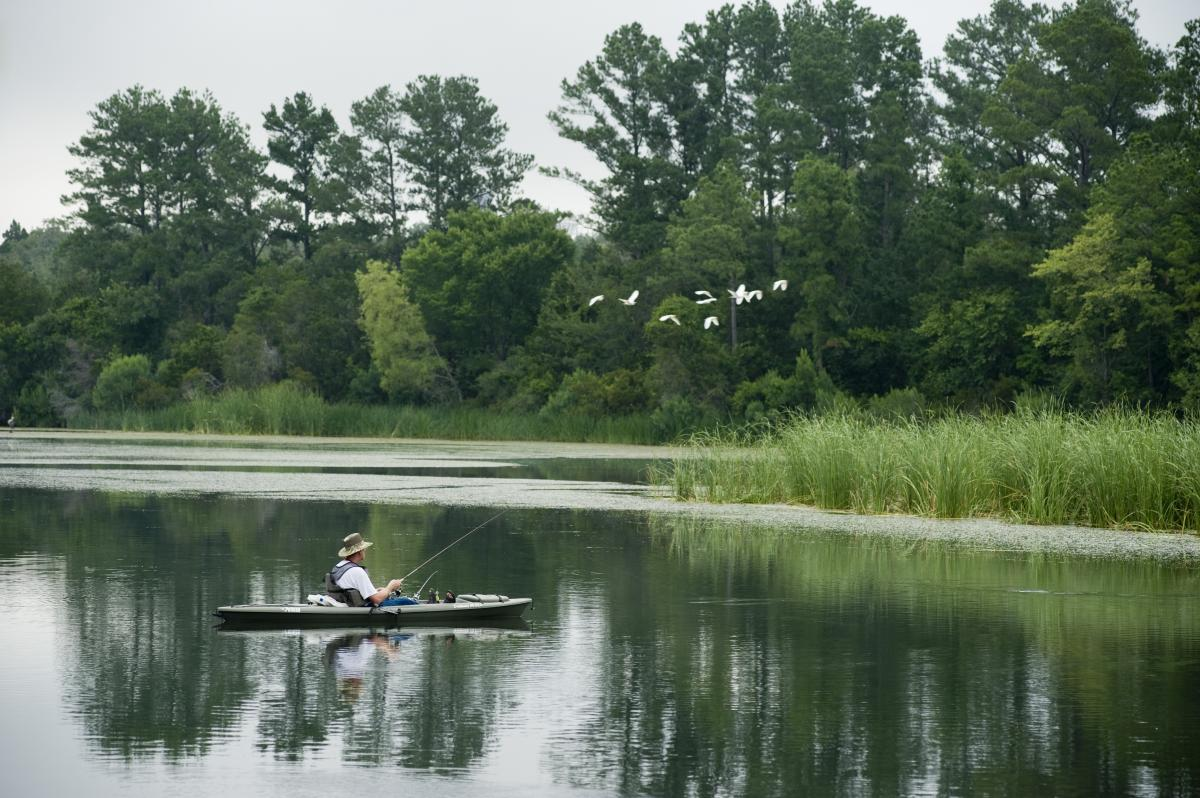 Man fishing on wooded lake as flock of birds fly by