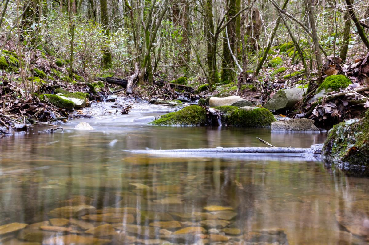 Chapman Mountain Preserve