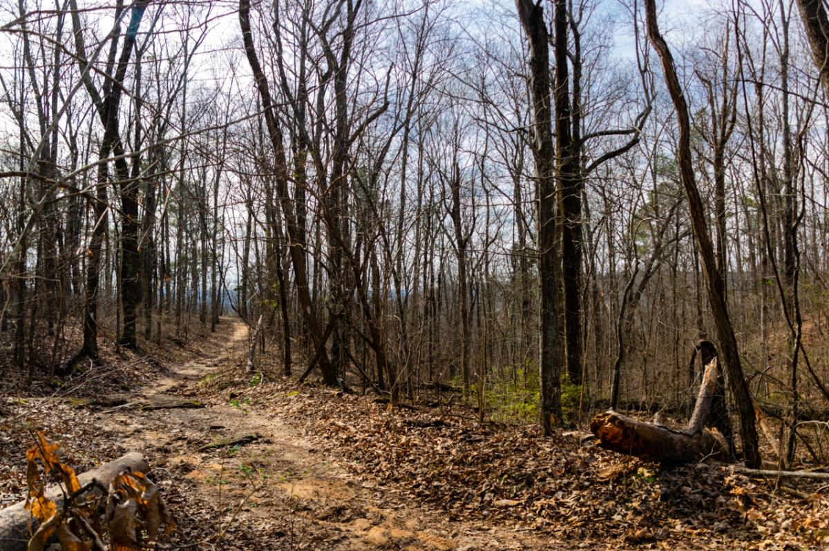 Monte Sano Winter Fire Tower Trail