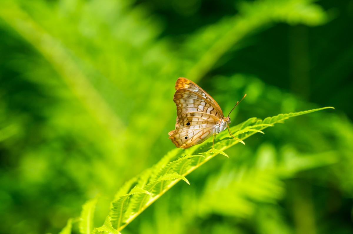 Huntsville Botanical Garden Butterfly