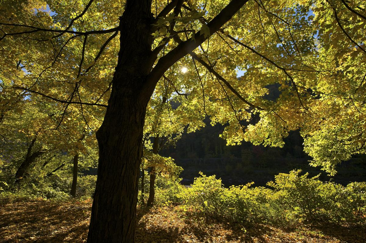 Get out and explore the fall foliage in the Poconos