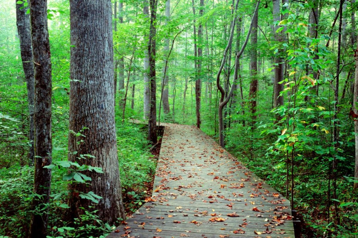 Cary Hemlock Bluffs Boardwalk