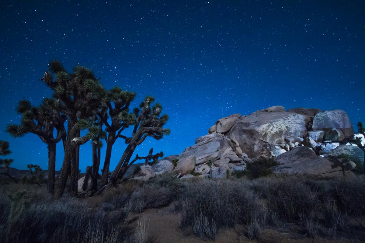 Joshua Trees under the stars at Black Rock Canyon Campground in Joshua Tree National Park