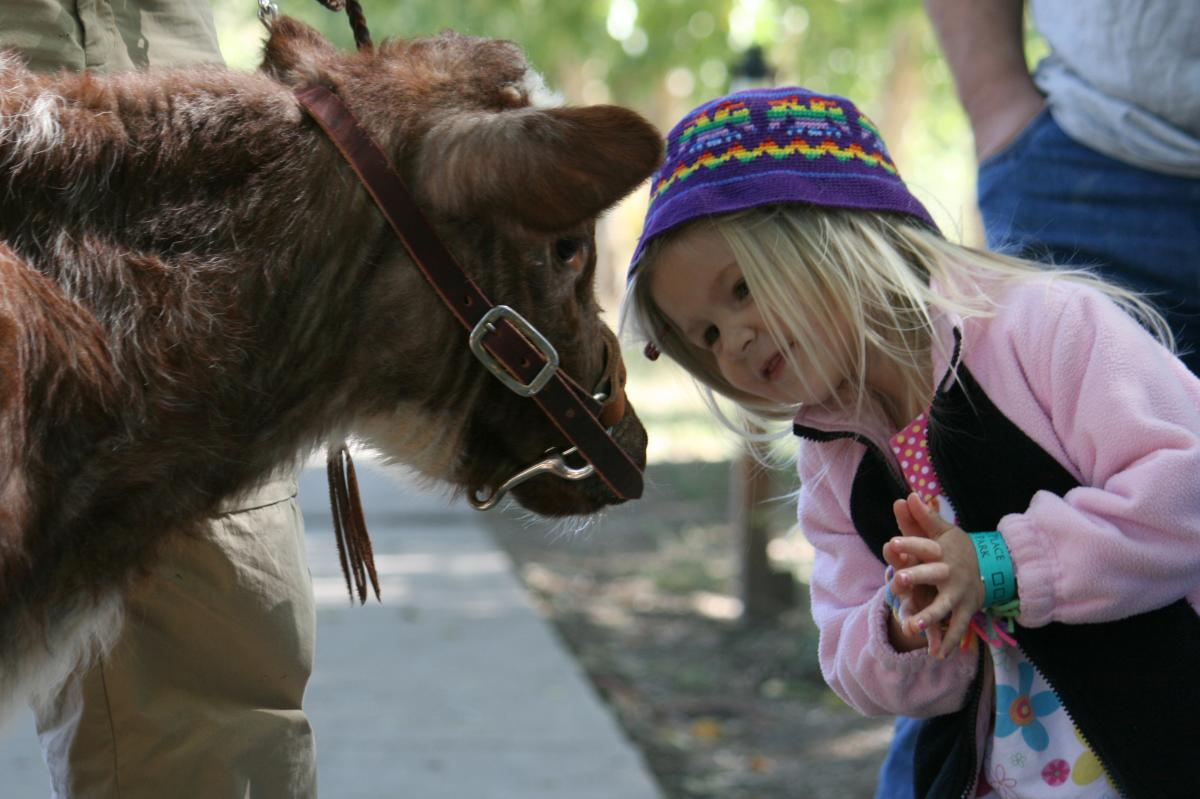 Warning: your kids might want an oxen as pet