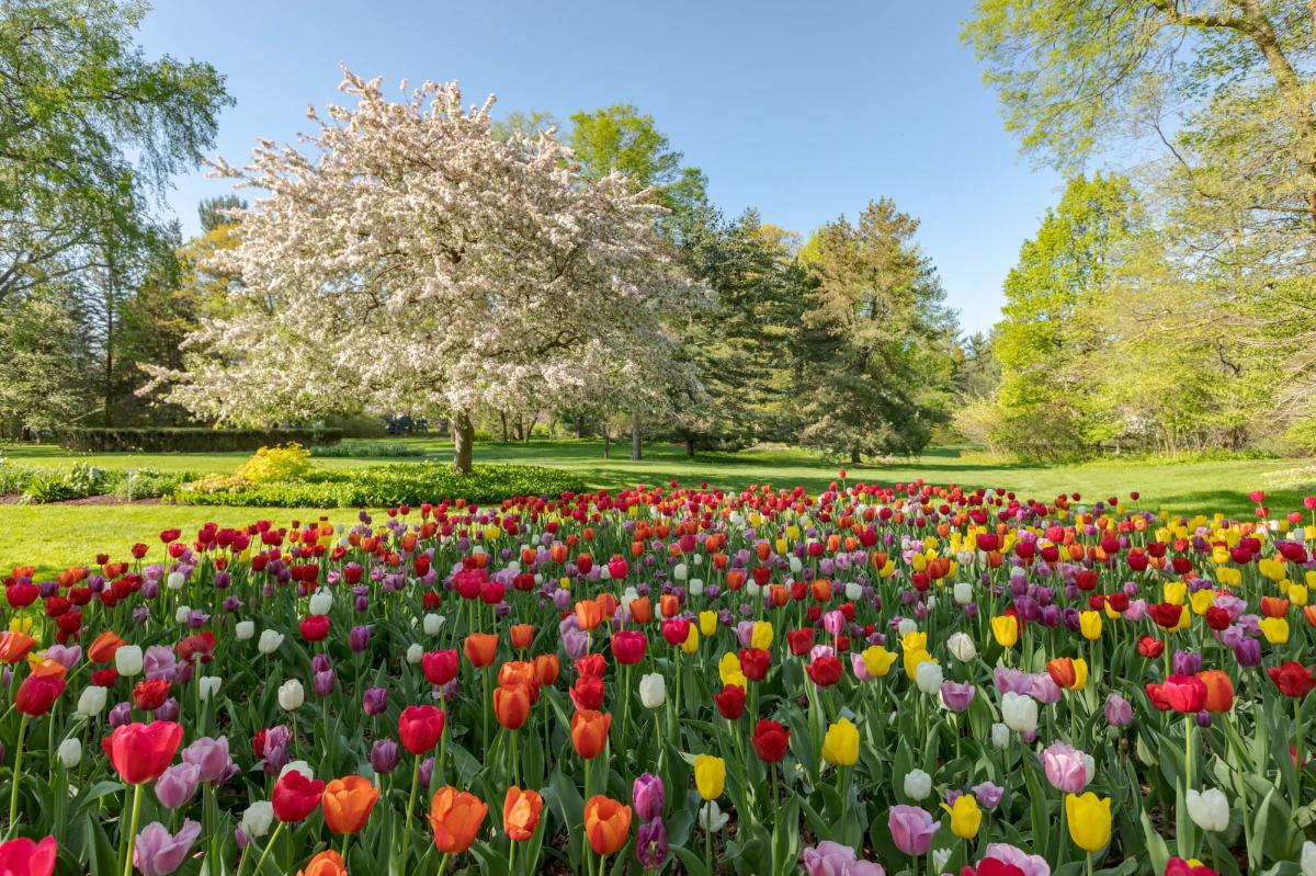 Flowers in Bloom at Dow Gardens in Midland, MI