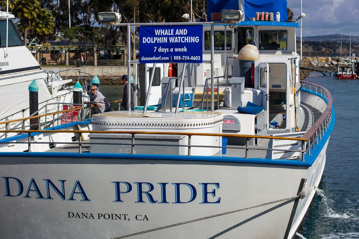 Dana Pride Whalewatching boat in Dana Point