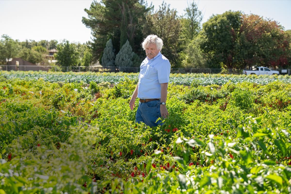 Paul Bosland in the Chile Pepper Institute's teaching garden, where varieties range from international favorites to multicolored ornamentals, New Mexico Magazine
