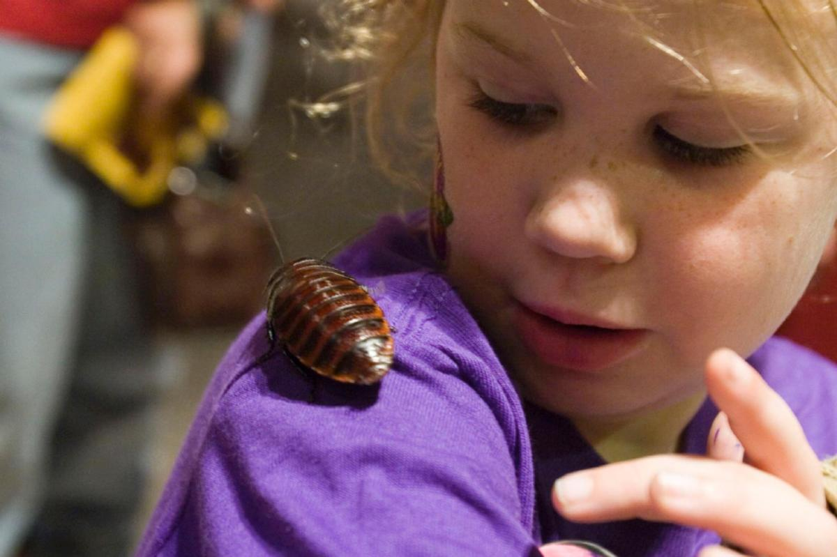 BugFest at North Carolina Museum of Natural Sciences