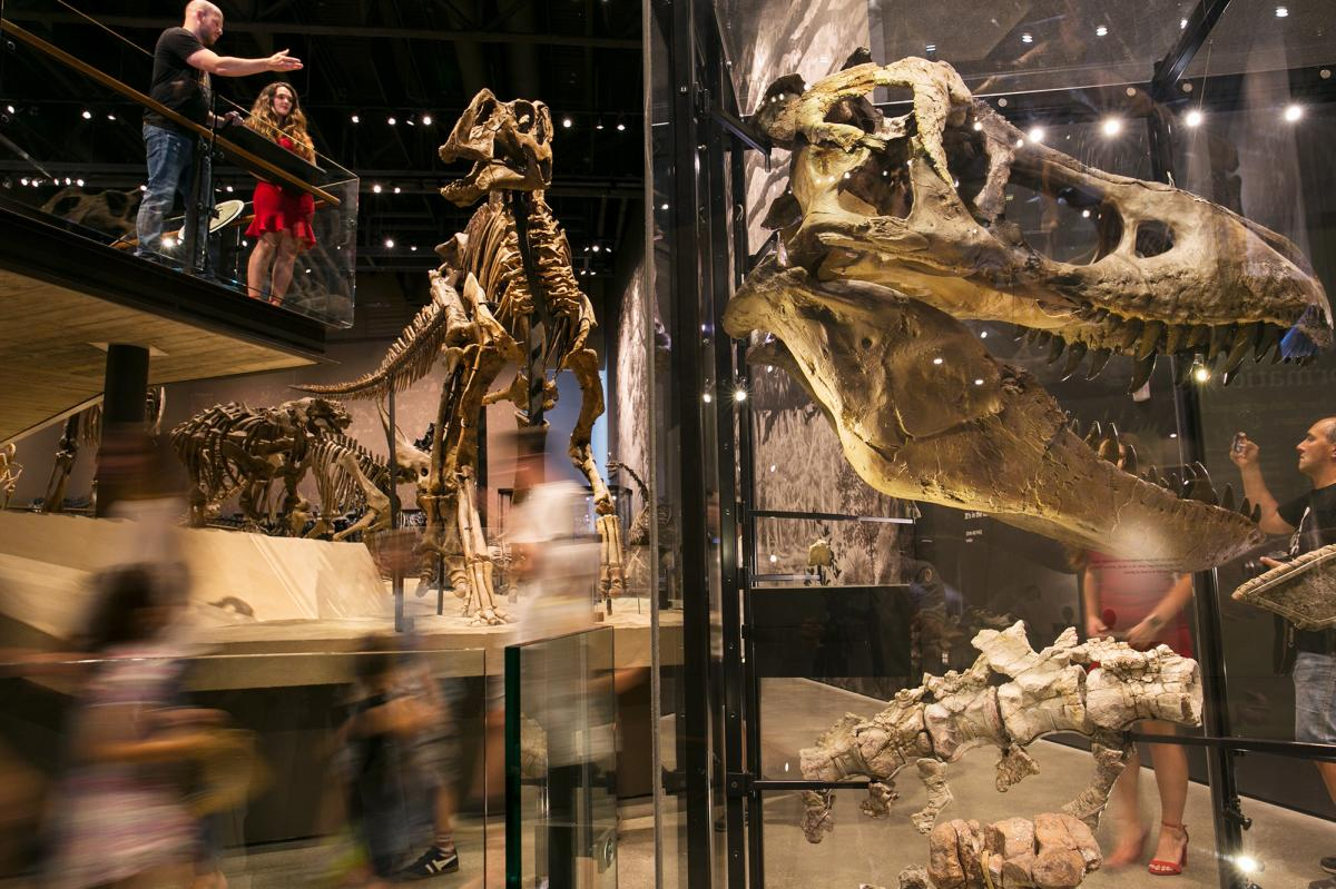 Explore Utah's fossil history at the Past Worlds exhibit at The Natural History Museum of Utah