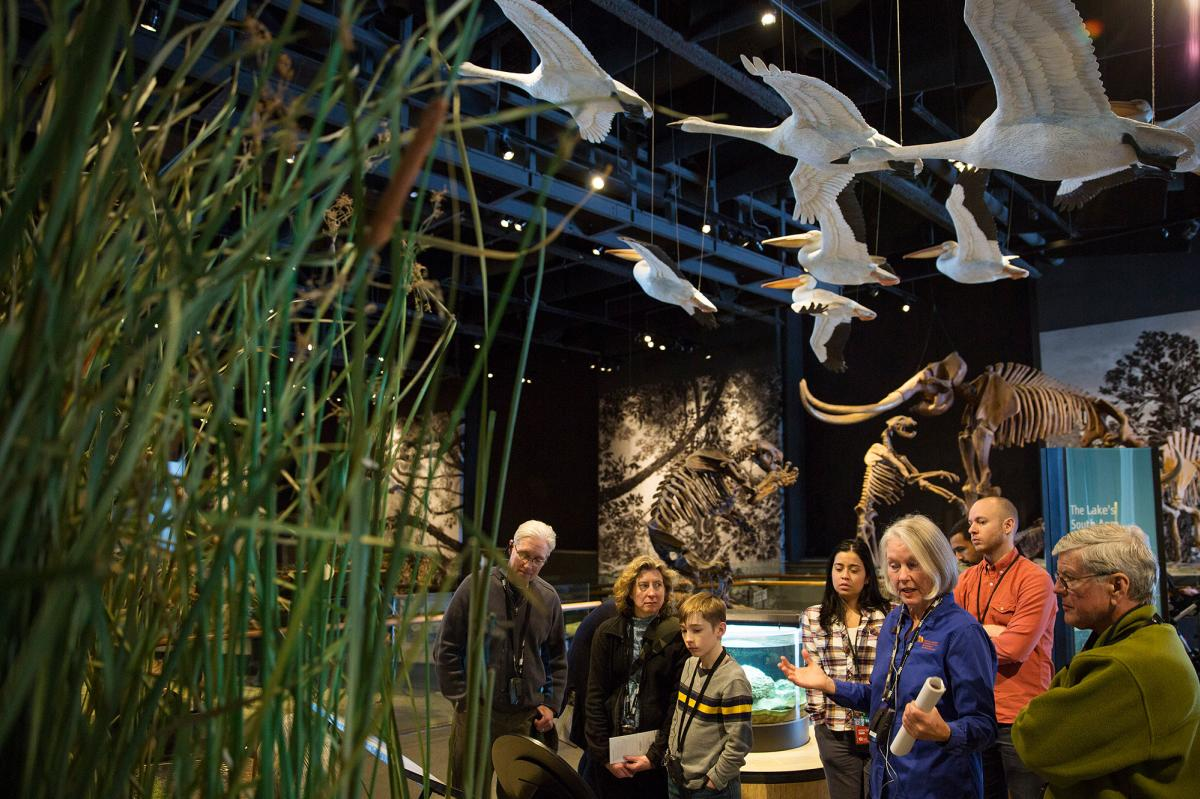 Come explore Utah's biomes in the Life Gallery at The Natural History Museum of Utah
