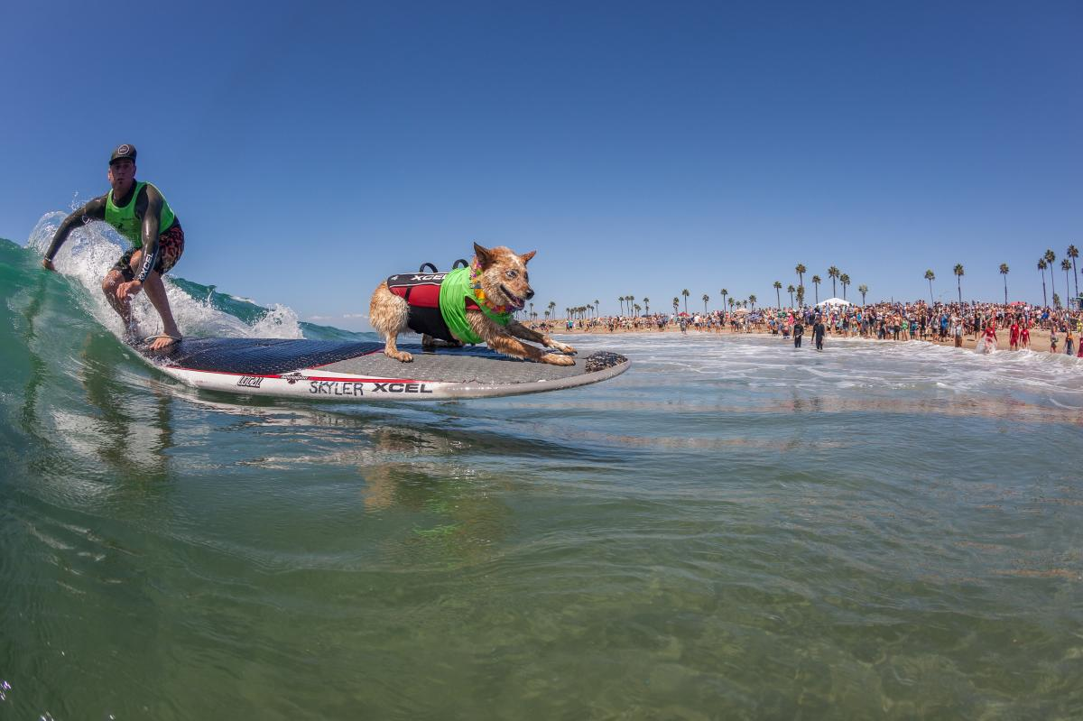 Surf City Surf Dog Event in Huntington Beach