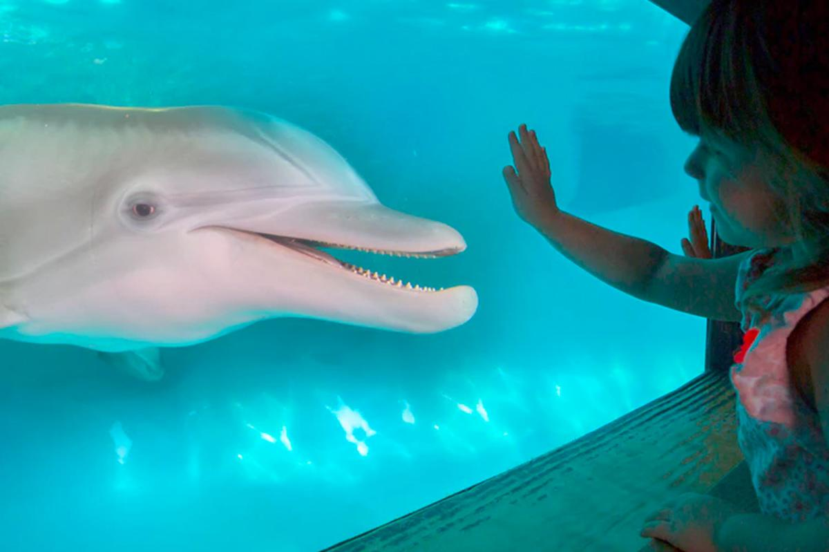 A girl interacting with a dolphin at the Clearwater Marine Aquarium