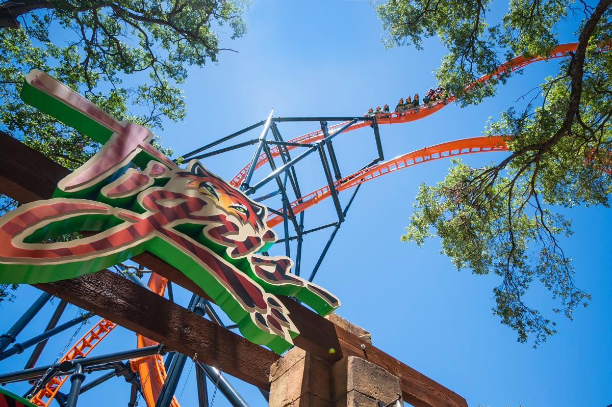 Busch Gardens® Tampa Bay Tigris