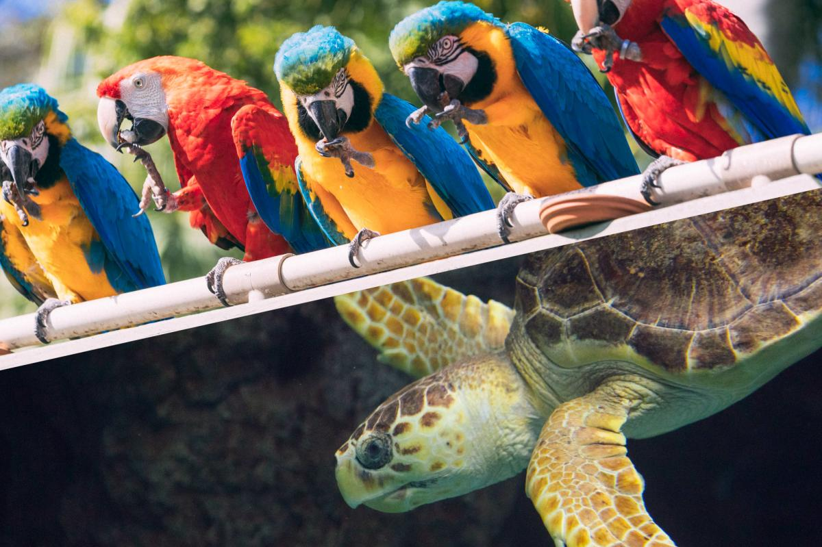 ZooQuarium combo ticket featuring macaws and a sea turtle