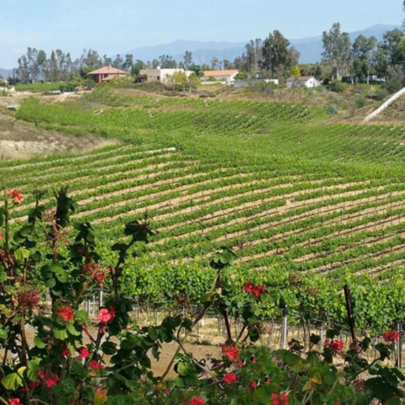 Bel Vino Landscape - Temecula