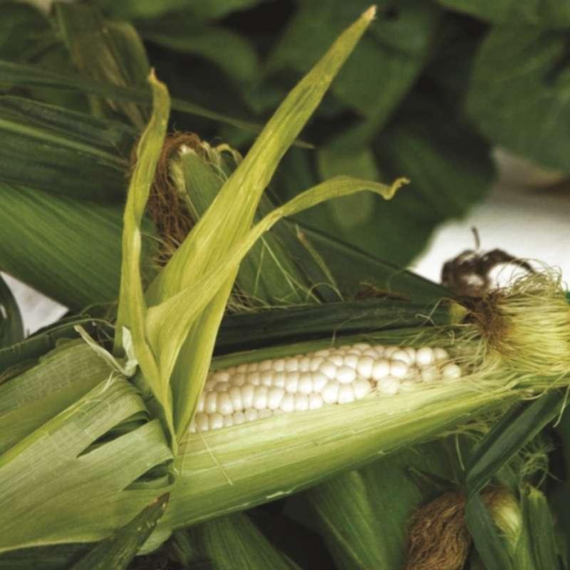 Sandhills Annual Rural Heritage Food Tasting