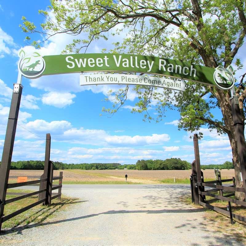 Sweet Valley Ranch's Dinosaur World