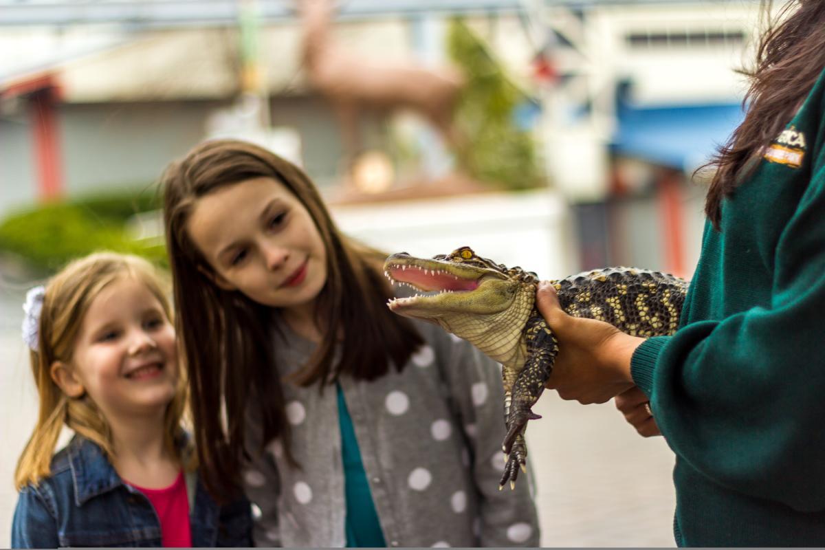 Zoo America Alligator in Hershey, PA