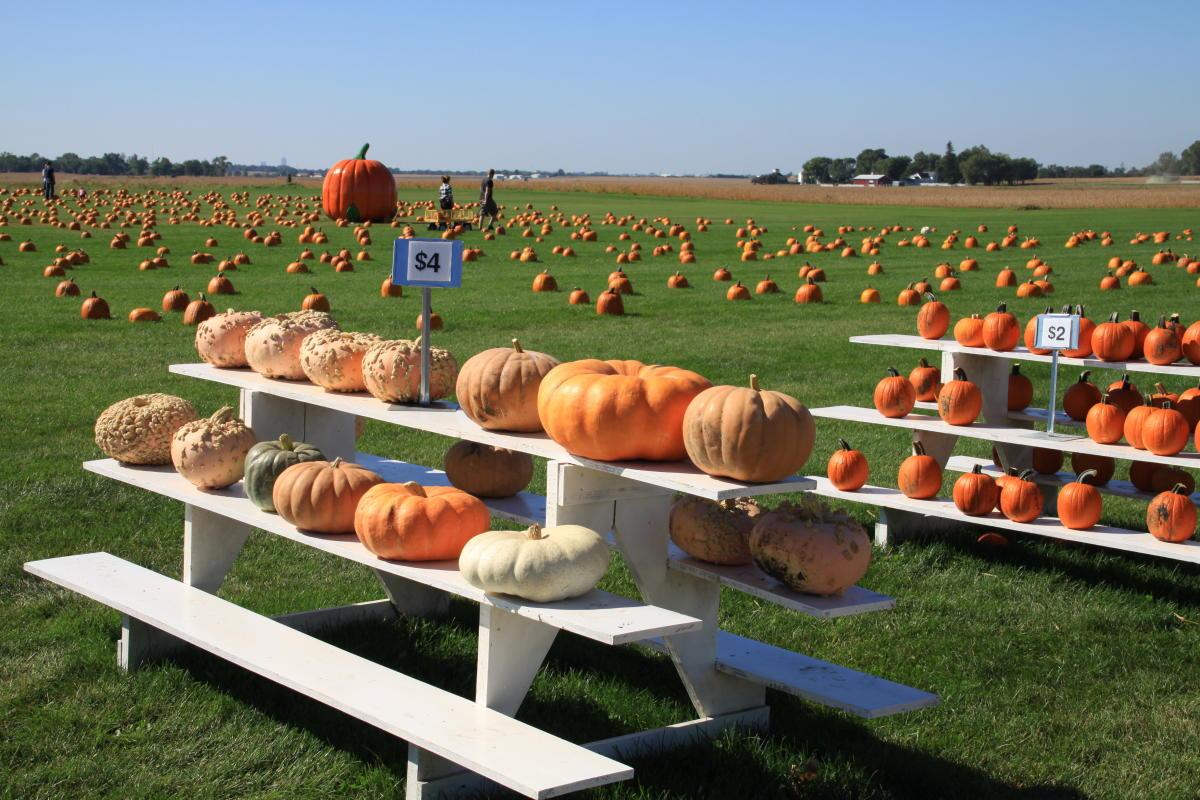 Geisler Farms pumpkins