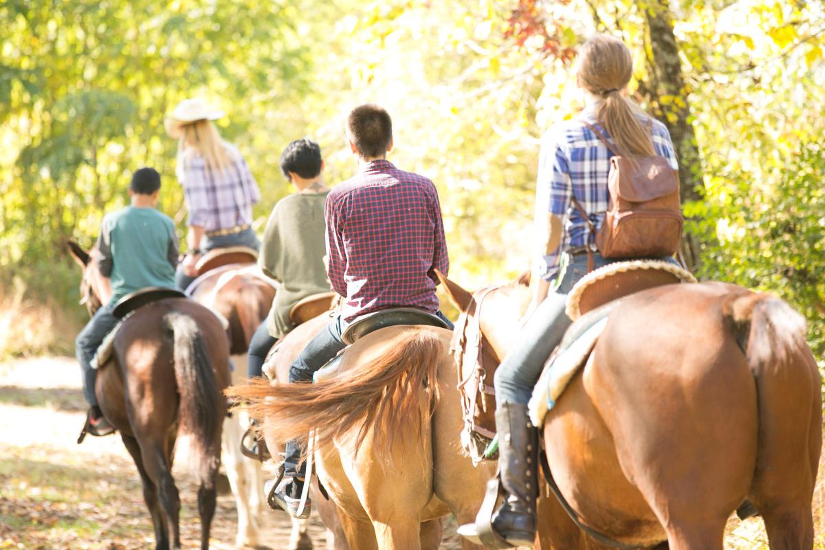 Saddle up for a scenic fall foliage horseback ride