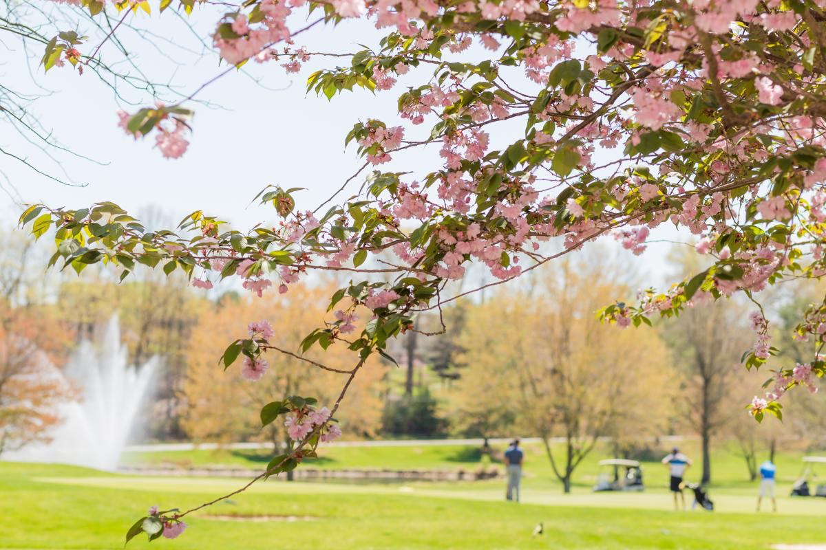 Turf Valley Cherry Blossoms