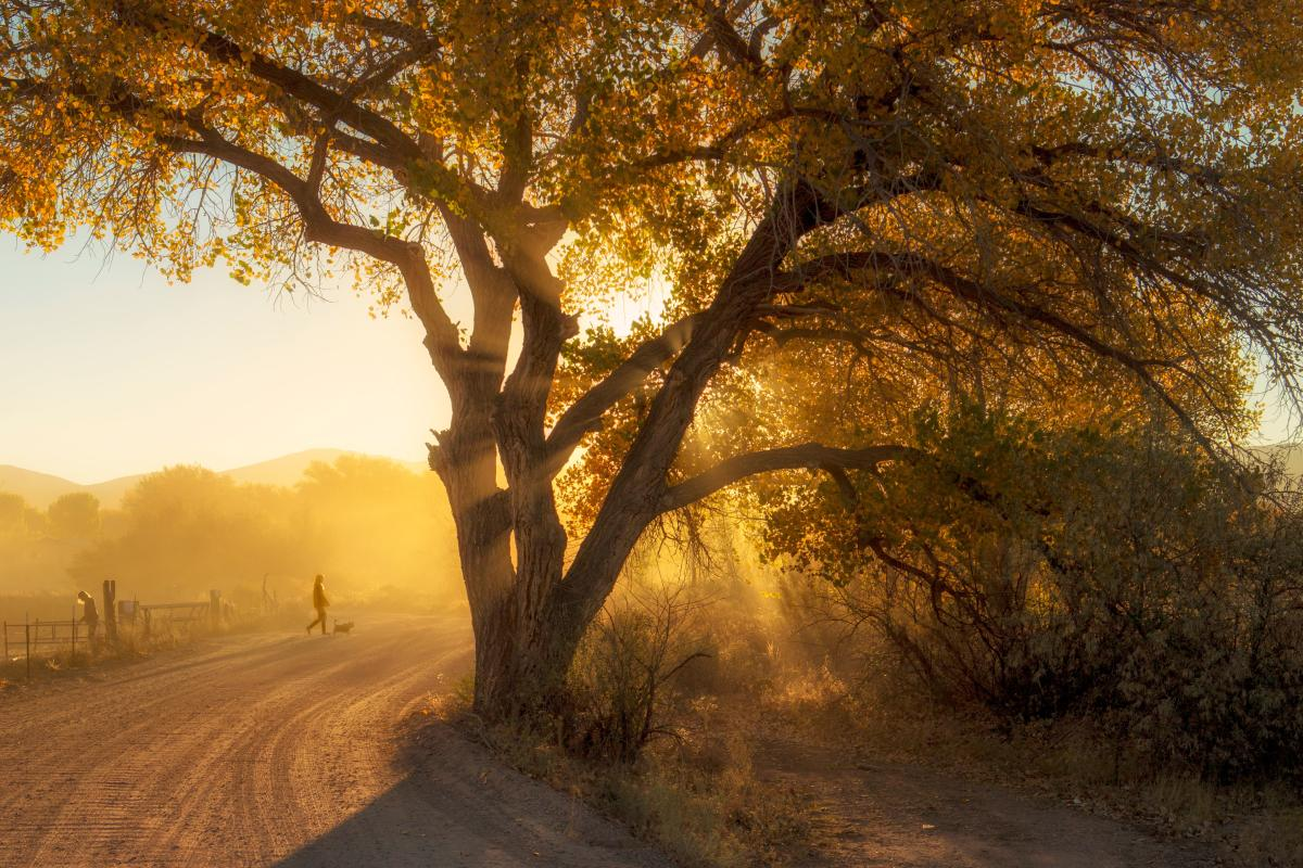 First Place: Only in NM, Fall Cottonwoods in Jacona by Kimber Wallwork-Heineman