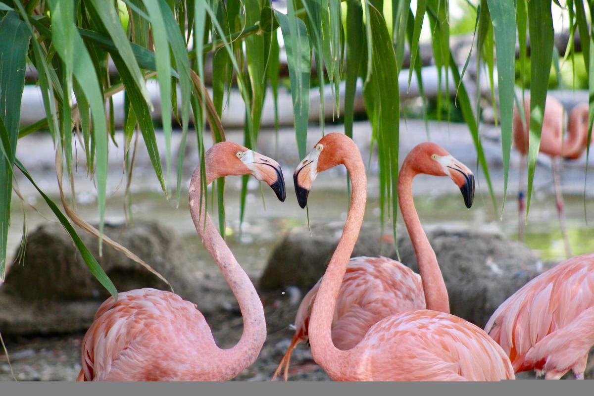 ABQ BioPark Flamingos