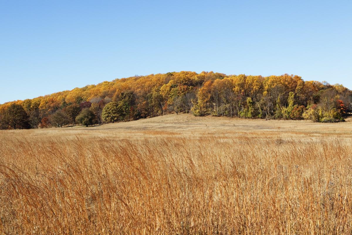 Mount Joy in Fall