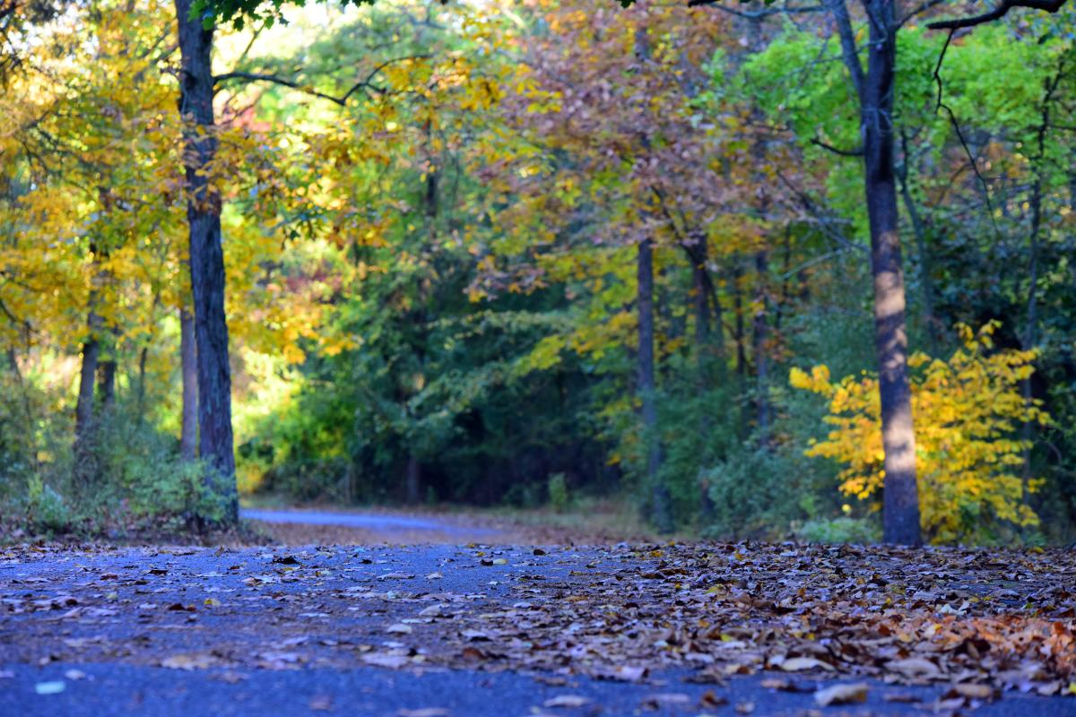 Evansburg State Park Road in Fall