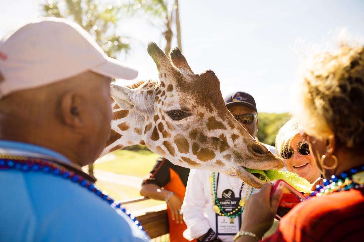 Busch Gardens Gasparilla FAM