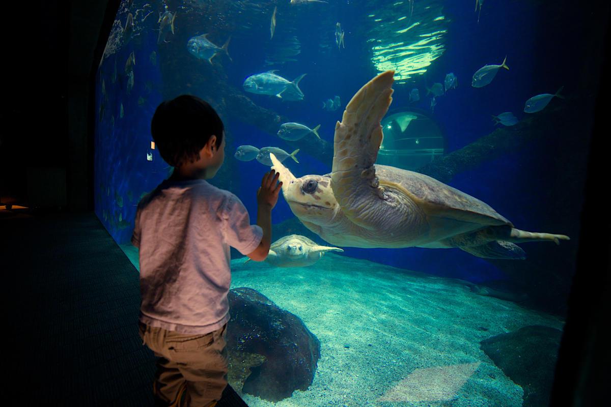Arts & Culture - History & Museums - Virginia Aquarium - Virginia Aquarium 18.jpg
