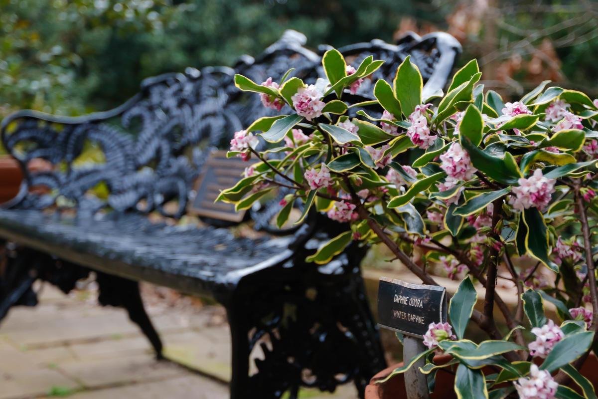 Founders Garden Bench