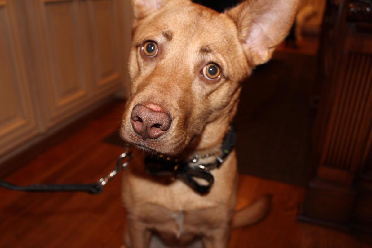 Emmy Dog
