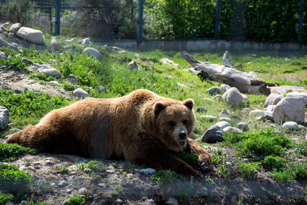 BC Wildlife Park