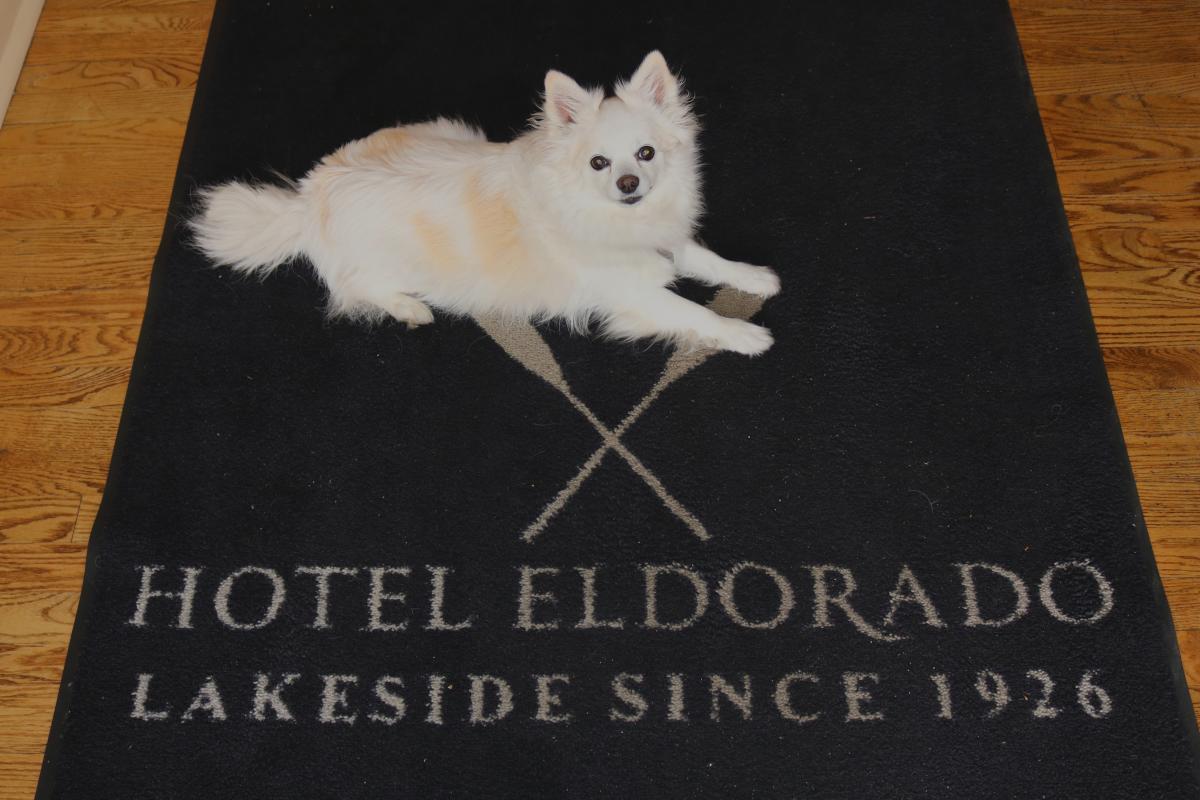 Hotel Eldorado with Dog