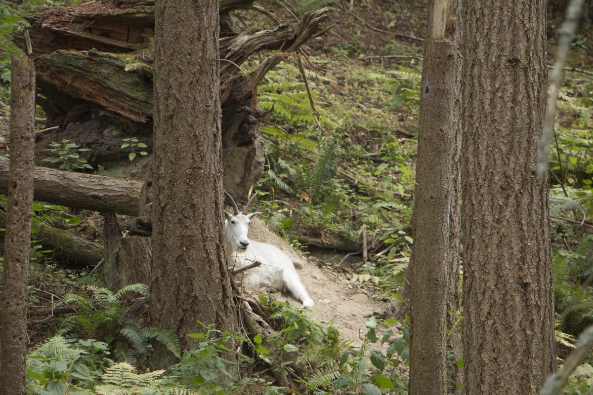 Keeper Adventure tour at Northwest Trek Wildlife Park