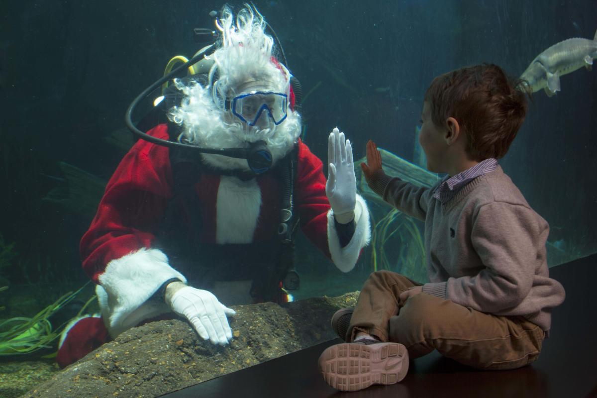 SCUBA Claus at the Tennessee Aquarium