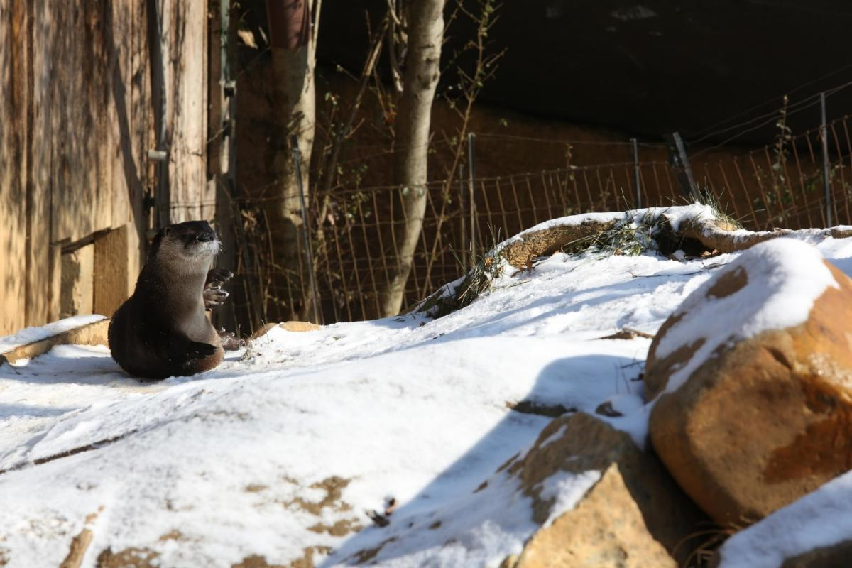 Zoo Knoxville otter