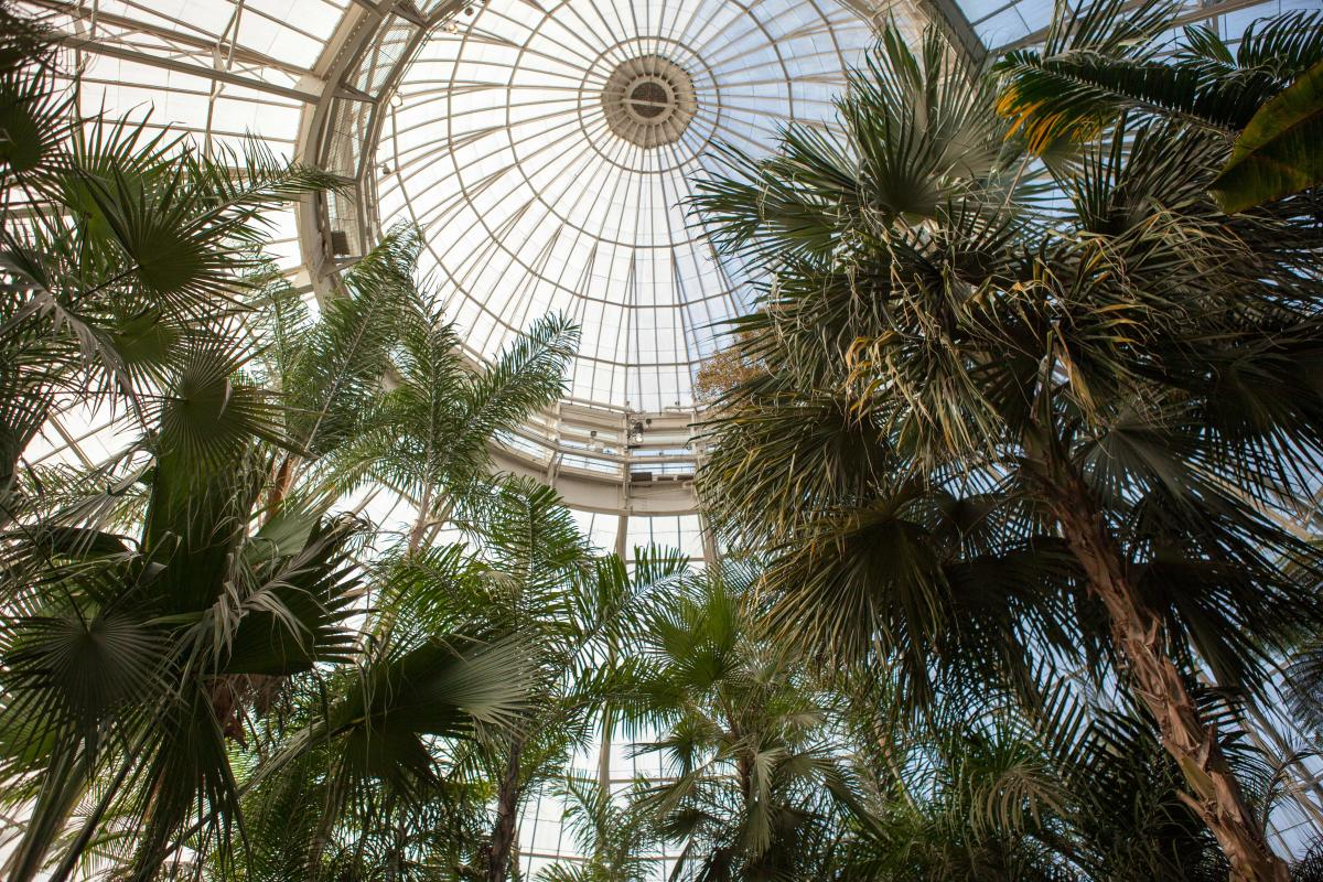 nybg, botanical garden,