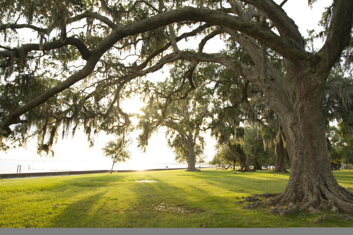 Majestic oak trees line the lakefront in Mandeville